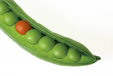 Different Pea